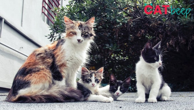 Do cats recognize their family?