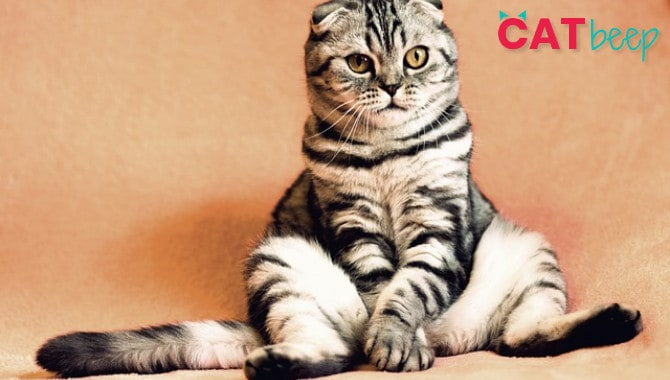 Do Male Cats Still Want to Mate After Being Neutered?