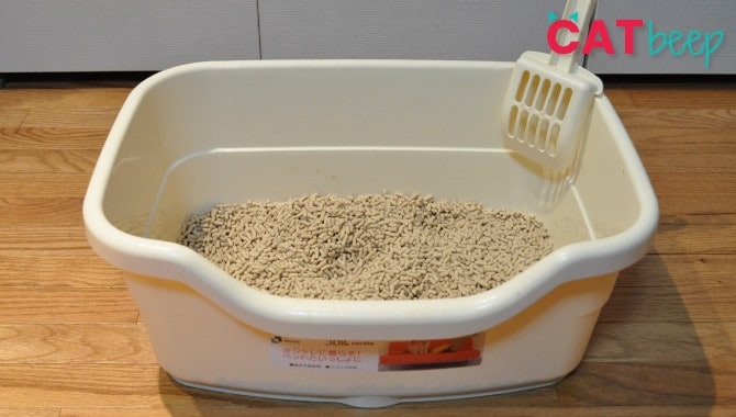 Why Does My Cat's Litter Box Smell Like Ammonia?