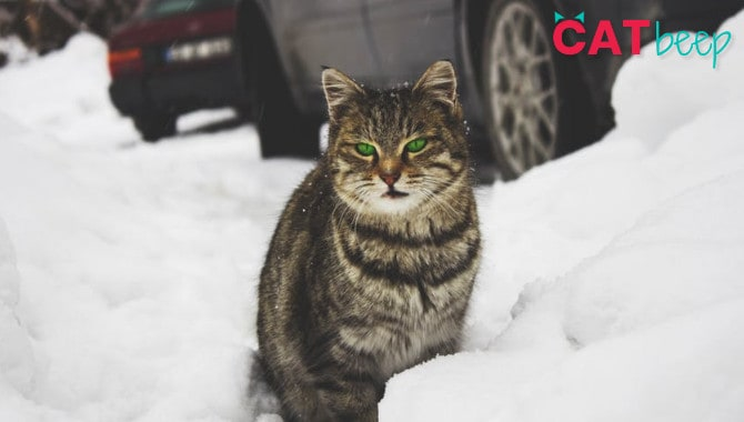 Do cats get cold indoors?
