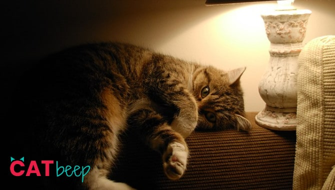 Do cats need light at night?