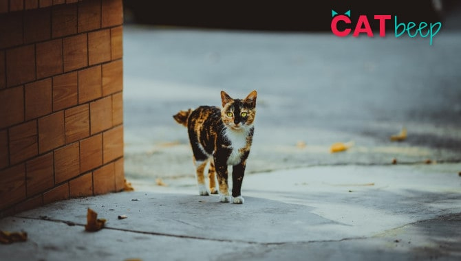 How long do cats go missing for?