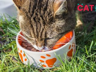 How much dry food should I feed my cat?