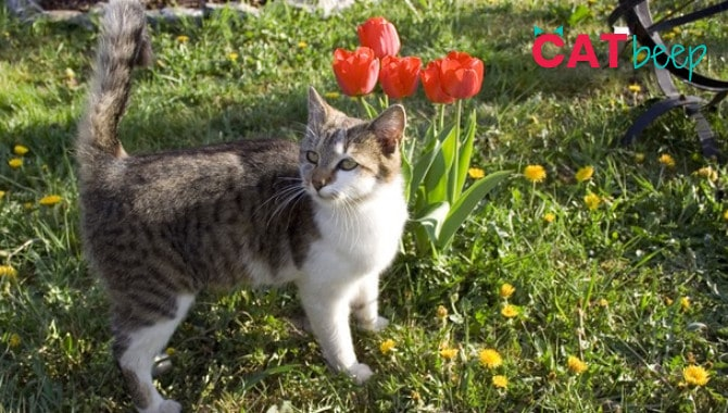 Are Tulips toxic for cats