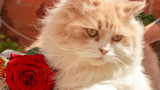 Are roses toxic to cats?