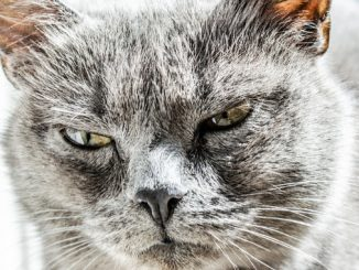 Can Cats See Infrared?