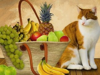 Can cats have bananas